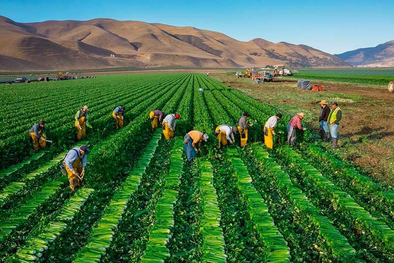 encuesta-precios-productos-agricolas
