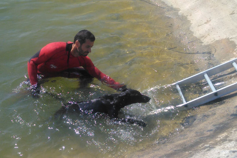bomberos-cieza-rescatan-perro-ahogaba