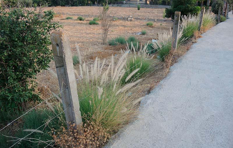 carm-quiere-acabar-plantas-exoticas-jardines