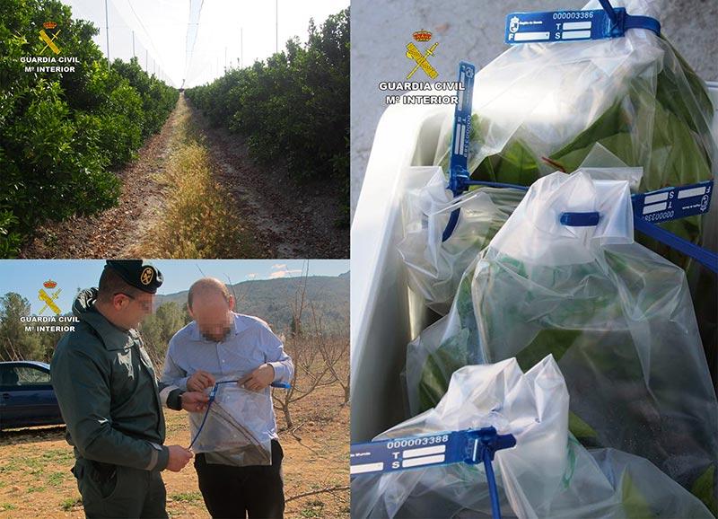 sorprendidas-tres-personas-utilizar-variedades-frutales-protegidas