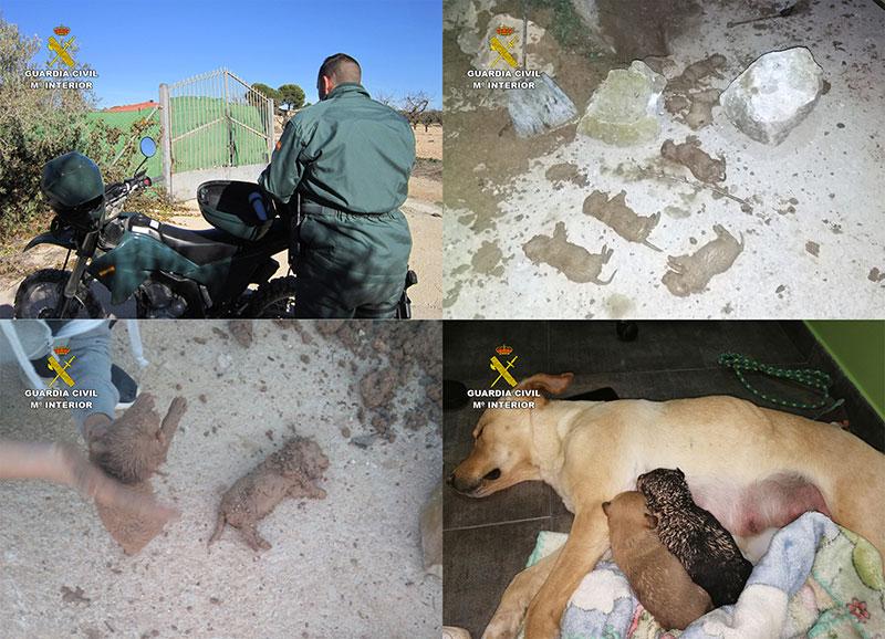 investigadas-tres-personas-sepultar-vivos-nueve-cachorros-camada