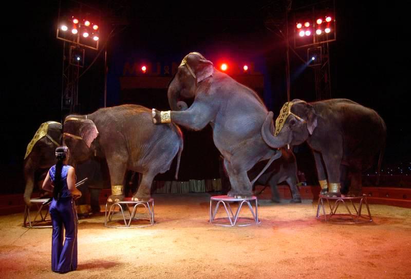 circo-debate-encuesta-semana