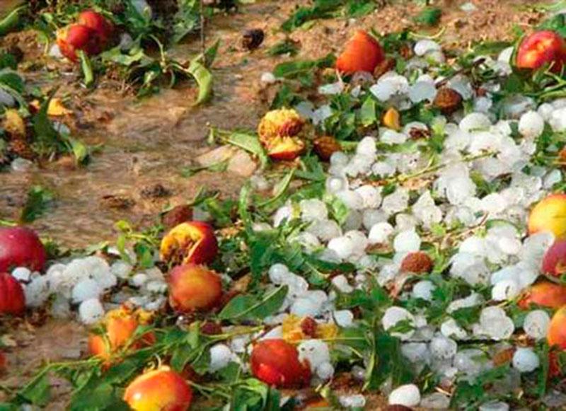 agricultura-establece-las-bases-reguladoras-para-las-subvenciones-a-la-suscripcion-de-los-seguros-agrarios