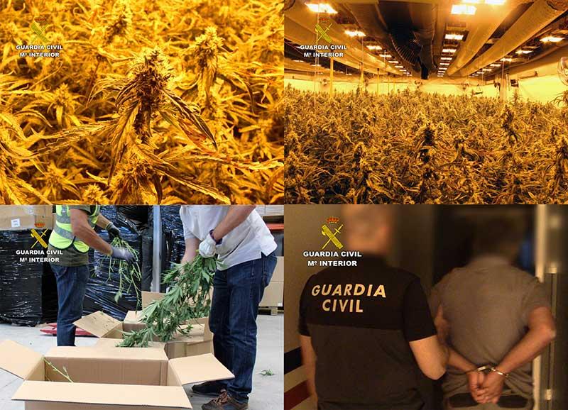 desmantelado-un-grupo-criminal-de-ambito-internacional-dedicado-al-cultivo-intensivo-de-marihuana