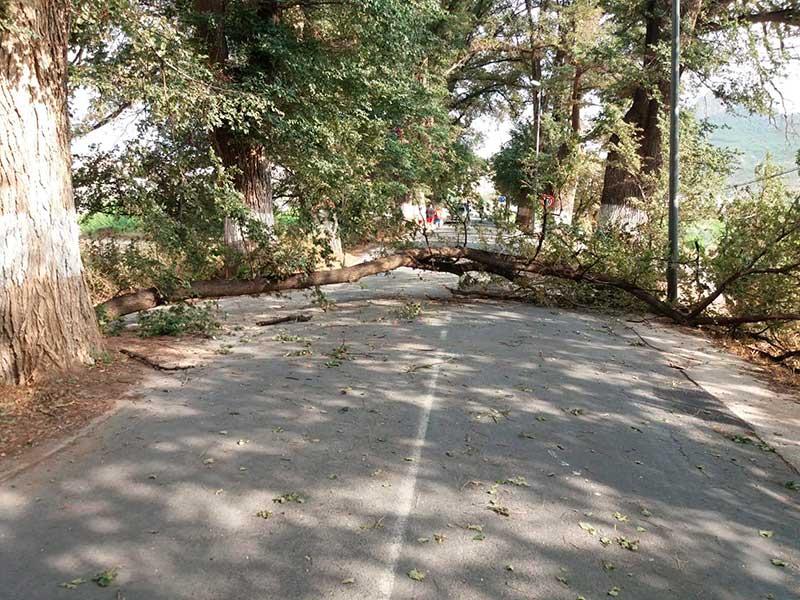 cae-otra-rama-grandes-dimensiones-olmeda-maripinar-carretera