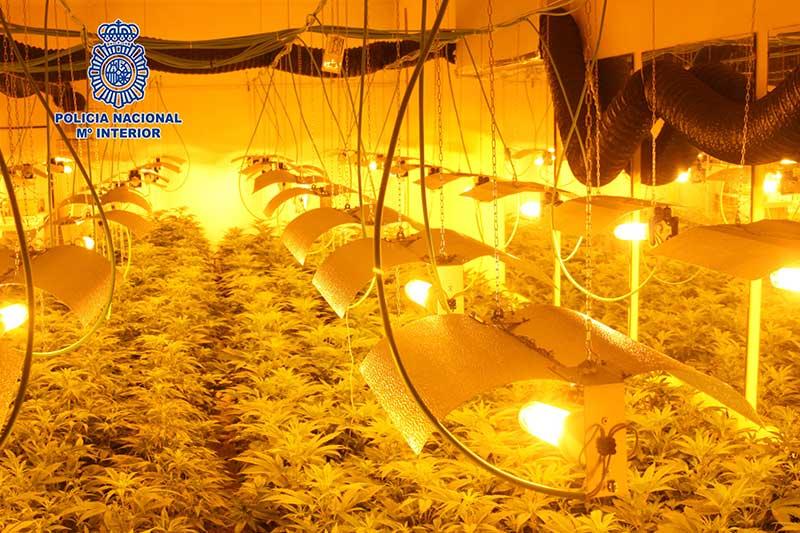 desmantelada-una-plantacion-de-marihuana-en-un-chalet