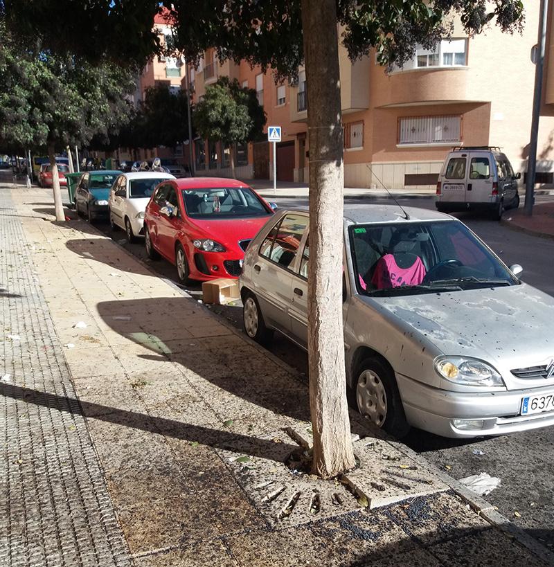ccci-ve-fallos-de-aplicacion-en-el-plan-de-arbolado-urbano