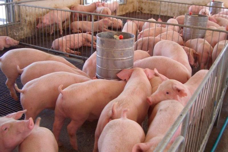 limpieza-adecuacion-poligonos-granjas-porcinas
