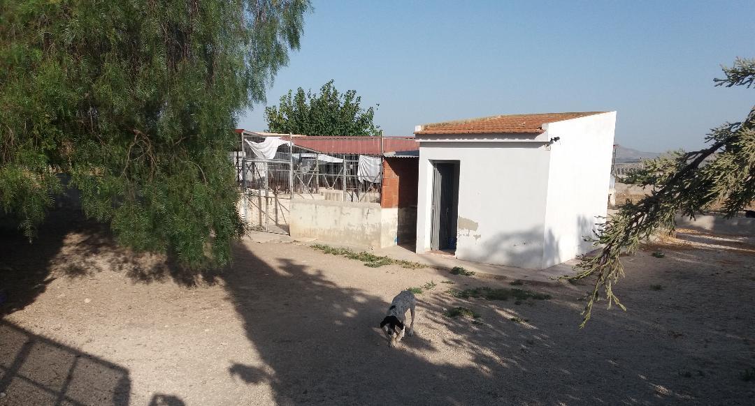 saorin-el-proyecto-del-centro-de-acogida-de-animales-ya-esta-en-contratacion