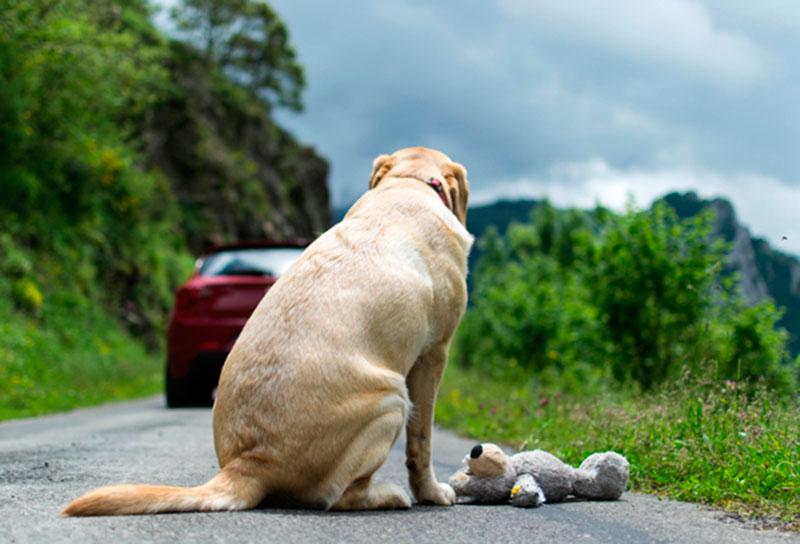 se-deberia-penalizar-a-quienes-abandonar-a-los-animales