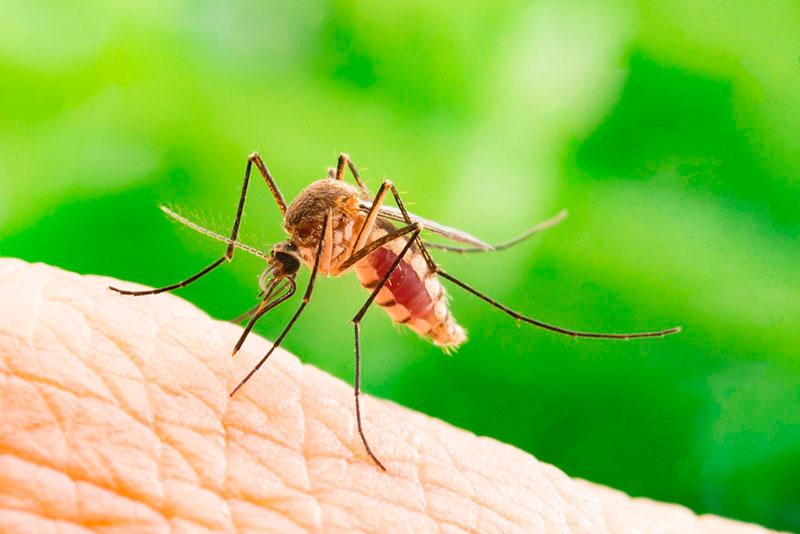 la-carm-aconseja-evitar-estancamientos-de-agua-para-impedir-la-proliferacion-de-mosquitos-tigre