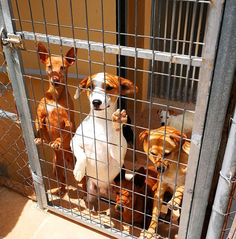 la-protectora-de-animales-el-hocico-solicita-que-concluyan-las-obras-de-la-antigua-perrera-municipal