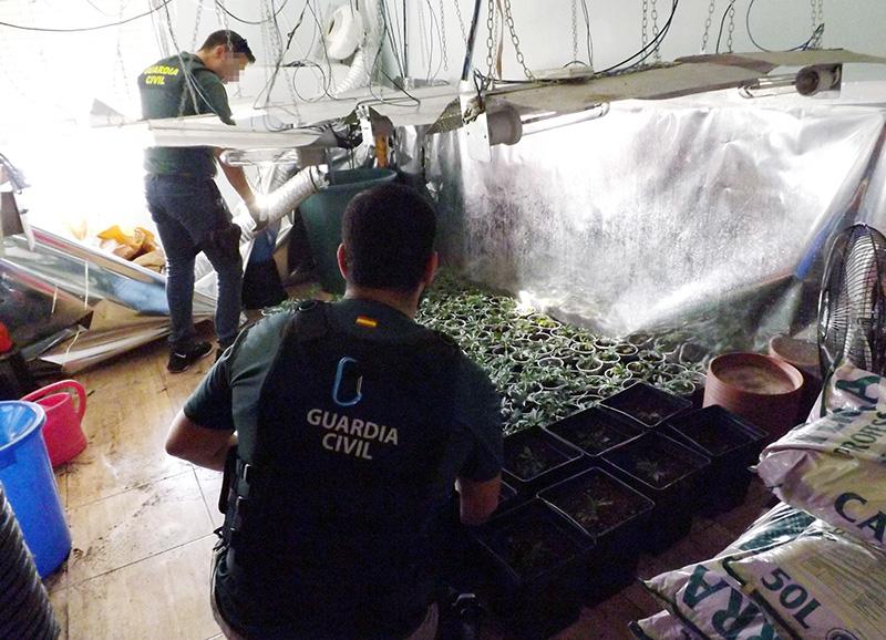 desmantelada-una-plantacion-de-marihuana-en-cieza