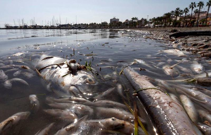 podemos-ciezaante-la-catastrofe-ecologica-del-mar-menor-es-necesario-que-se-depuren-las-responsabilidades