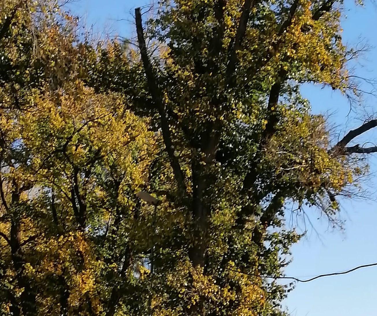 ecologistas-en-accion-la-seguridad-se-garantiza-con-una-buena-a-conservacion-de-la-olmeda