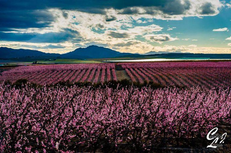 creeis-que-floracion-alcanzara-los-80-000-visitantes-este-ano